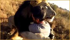 abrazo-leon