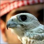 halcon-jeque