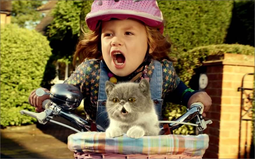 anuncio-gatito-viral