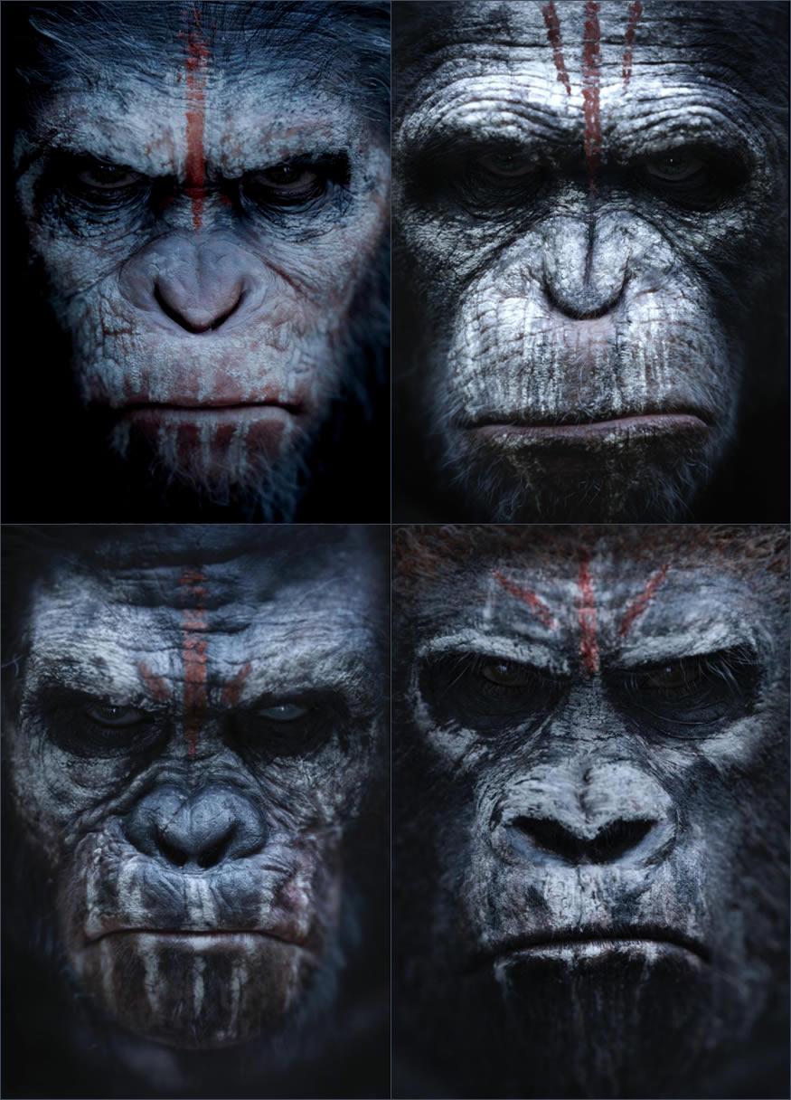 monos-simios