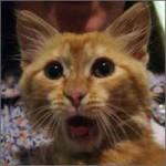 gato chocando