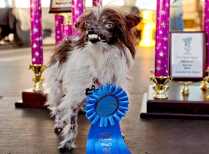new-ugliest-dog-1