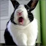 conejo-rasurado