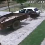 robando-vaca