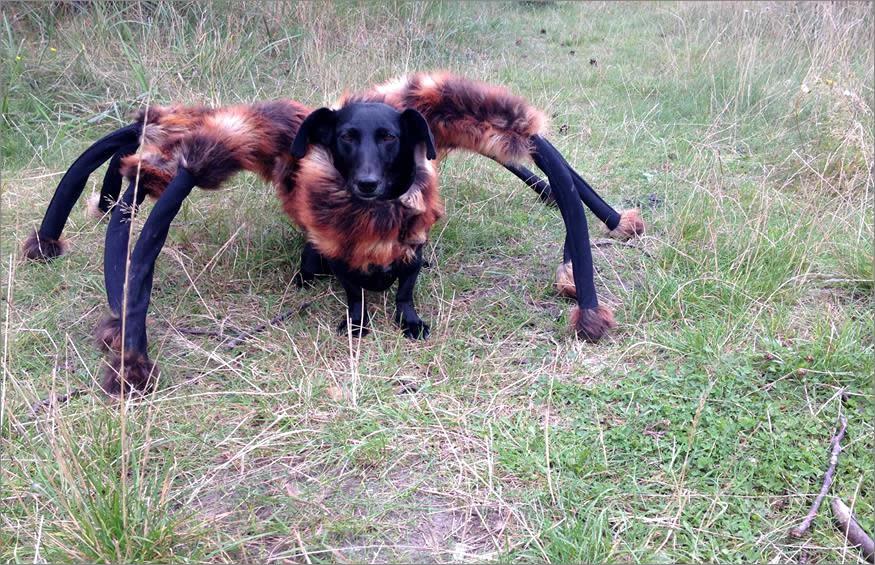 perrete-spider