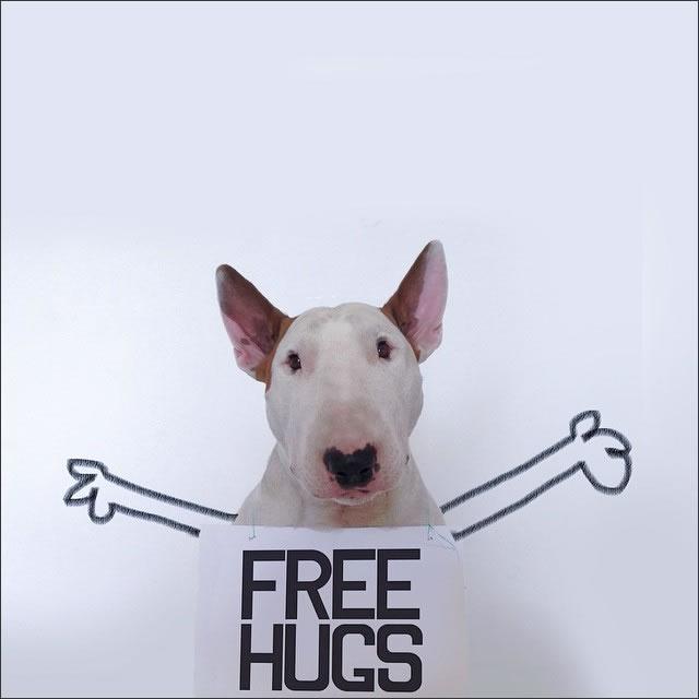 perro-abrazos