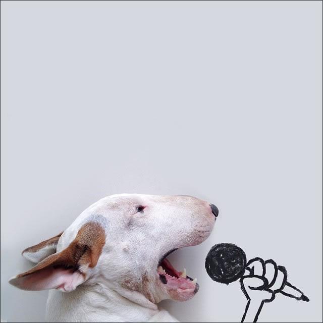 perro-canta
