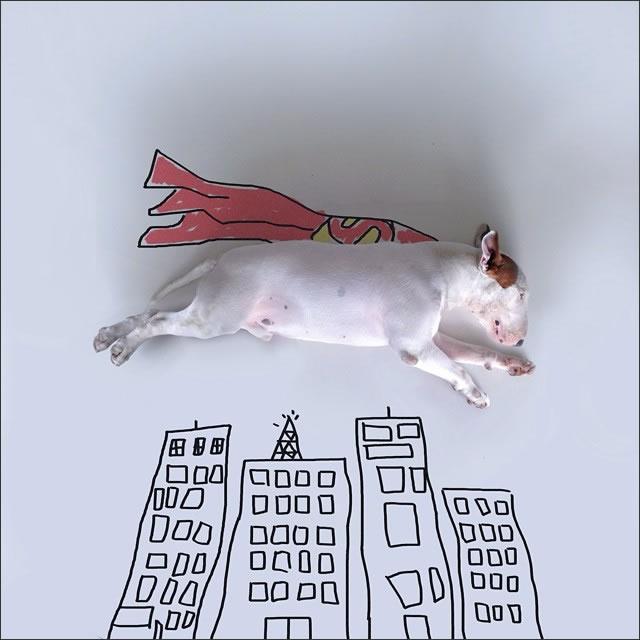 perro-superman