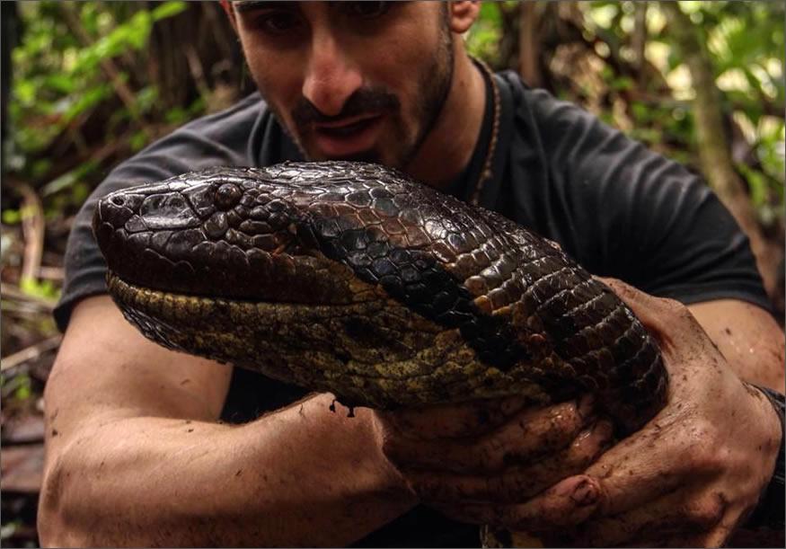 Se deja comer vivo por una anaconda
