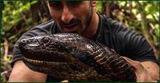 anaconda-desayuno