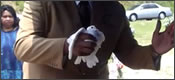 paloma-vuela