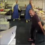 tiburon-pescaderia