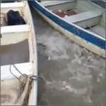 alimentando-pescaitos
