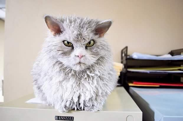 gato-archivo