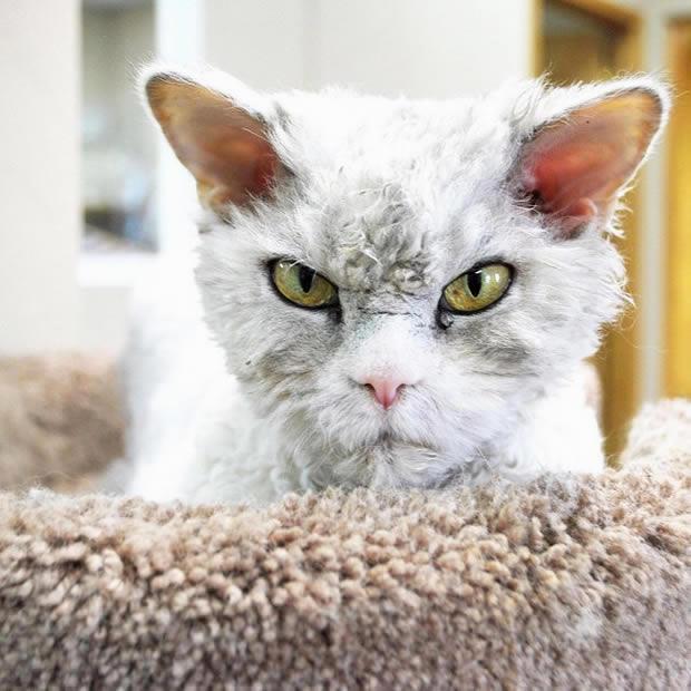 gato-enfadao