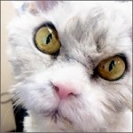 gato-malaleche