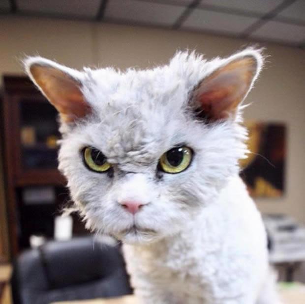 gato-mess