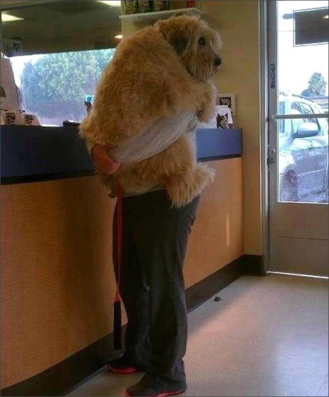 perro-veterinario-abrazo