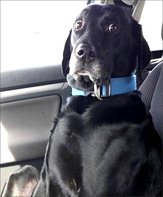perro-veterinario-miedo
