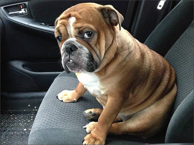 perro-veterinario-porque
