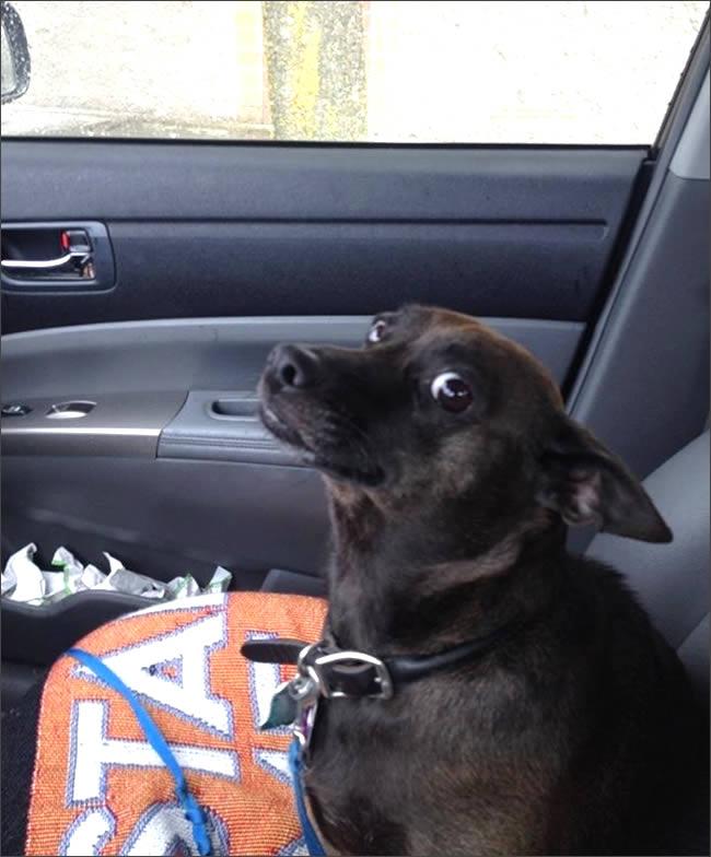 perro-veterinario-really