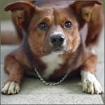 perro-anuncio