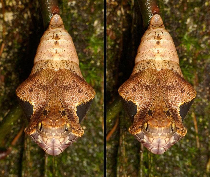 Capullo de mariposa con mala pinta