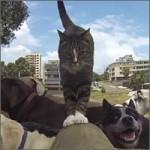 gato-entrenado