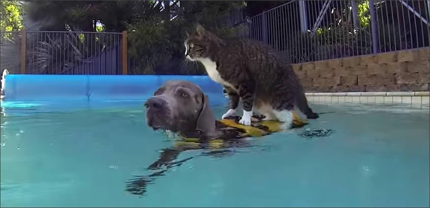 gato-sobre-perro