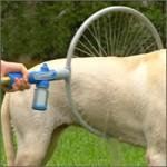 ducha-perros