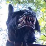 bozal-perros