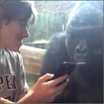 movil-gorila