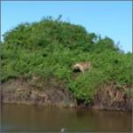 caza-africa-jaguar