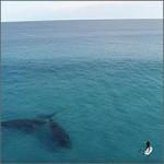 paddle-surf-ballenas200