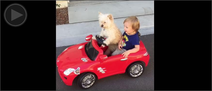 video-cocheperros