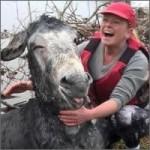 burro-desconojado