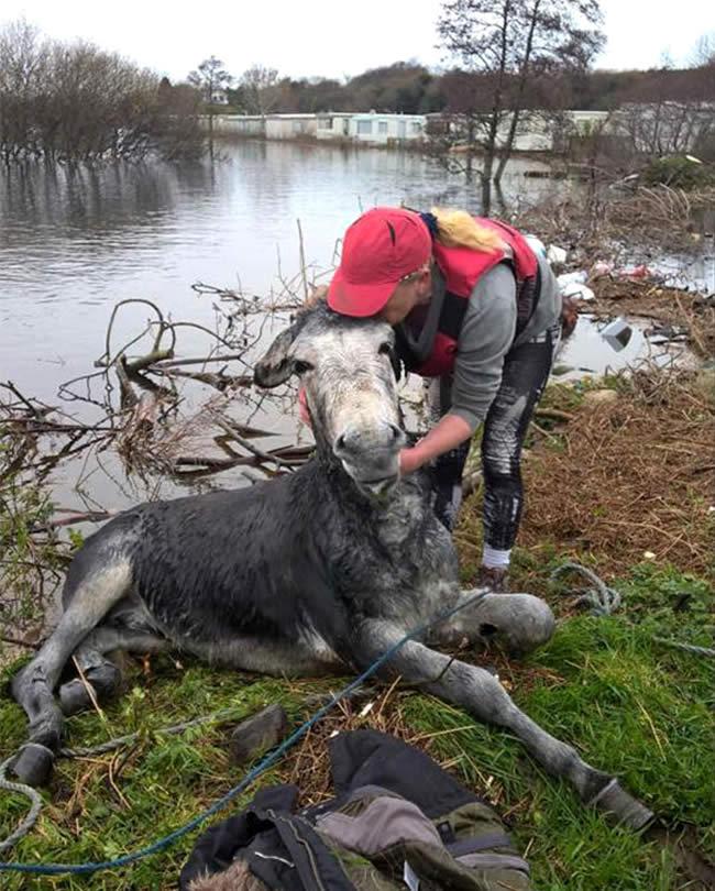 burro-rescatado