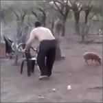 cogiendo-cerdo
