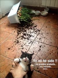 Gato culpable