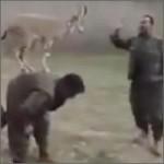 cabra-kurdistani