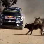 rally-casi-vaca