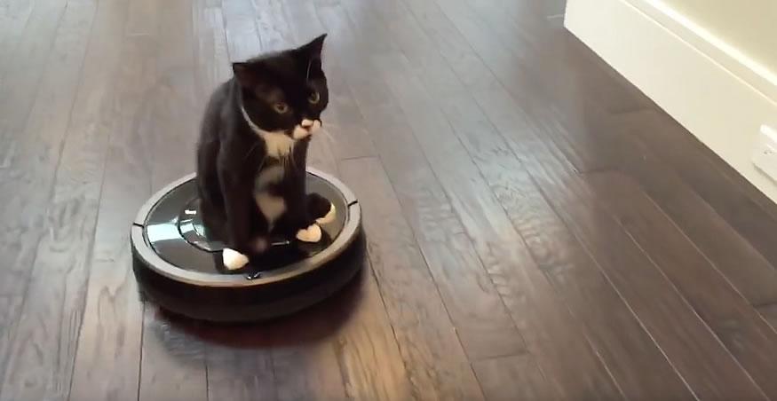 silla-ruedas-gato