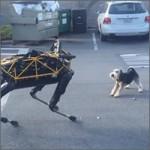Los perros odian a los robots de Boston Dynamics