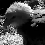 webcam-aguila-200