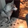 perro-huellas