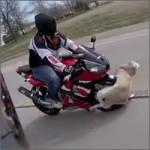 perro-motos