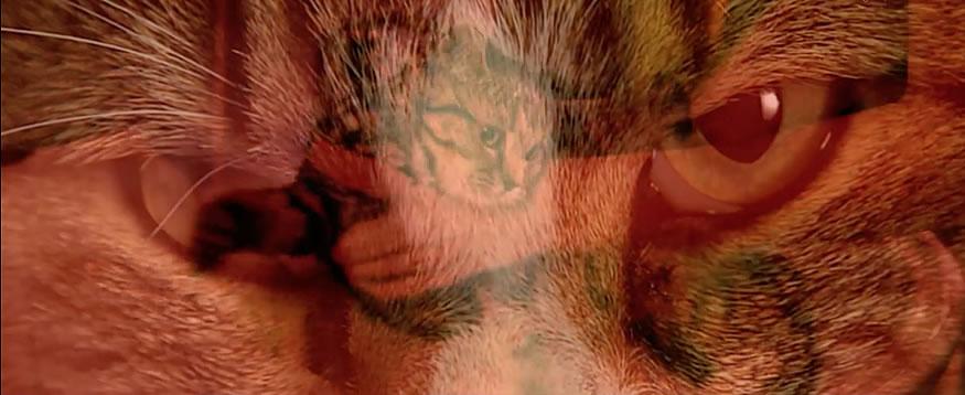 Gatos en escenas de películas