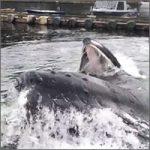 ballenas-alaska200