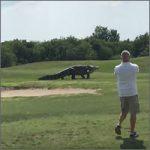 cocodrilo-gigante200
