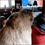 oso-ruso200